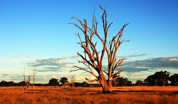 Sprachreisen australien outback
