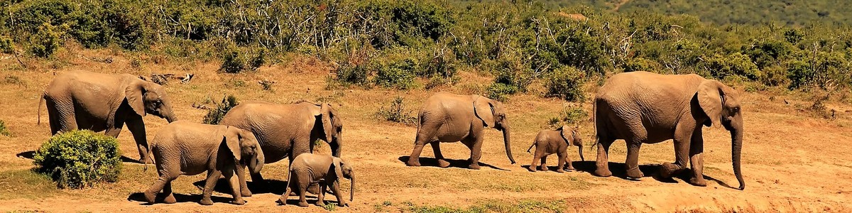 Sprachreisen suedafrika